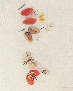Summer shell butterflies